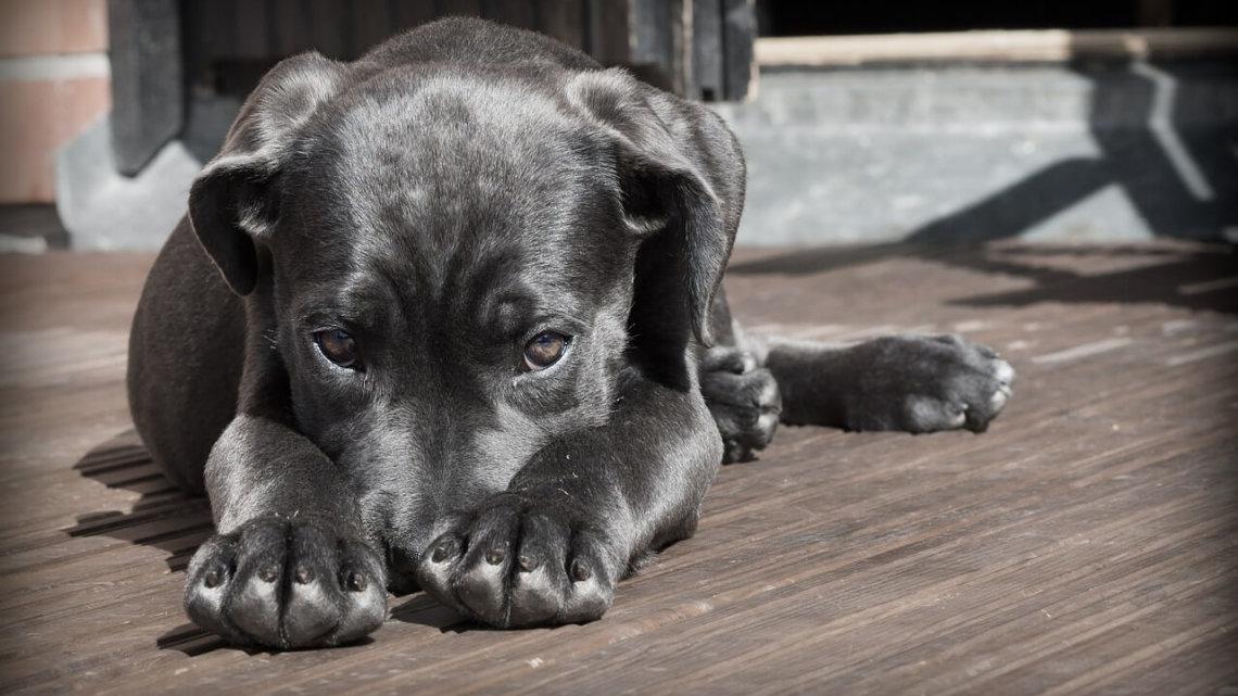 Choroby psów