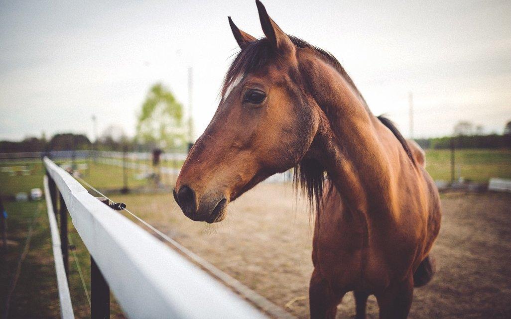 Jak prawidłowo pielęgnować swojego konia i sprawować nad nim opiekę?